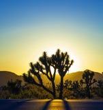 Krajobraz z Joshua drzewami zdjęcia royalty free