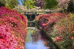 Krajobraz z kanałowymi i kolorowymi kwiatami Obrazy Royalty Free