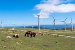 Krajobraz z koniami, silniki wiatrowi dla zasilania elektrycznego pokolenia zdjęcie stock