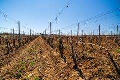 krajobraz z kulturą winogrady Zdjęcie Royalty Free