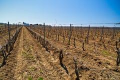 krajobraz z kulturą winogrady Zdjęcie Stock