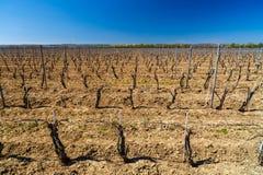 krajobraz z kulturą winogrady Obrazy Stock
