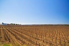 krajobraz z kulturą winogrady Obraz Stock