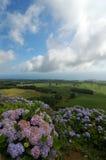 Krajobraz z kwiat hortensjami zdjęcie royalty free