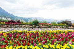 Krajobraz z kwiatami w górze zdjęcia stock