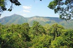 Krajobraz z lasowymi wzgórzami i drzewami Fotografia Stock