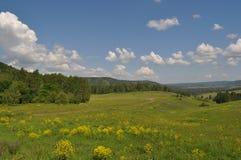 Krajobraz z lato łąką Zdjęcia Royalty Free