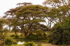 Krajobraz z małym stawem Tanzania, Afryka Zdjęcie Royalty Free