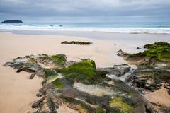 Krajobraz z mokrymi nabrzeżnymi skałami z gałęzatką Obrazy Stock