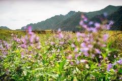 Krajobraz z moutains i lilymi kwiatami, tiltshift widok Fotografia Royalty Free