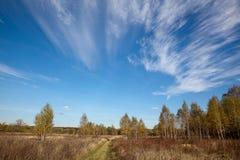 Krajobraz z niebieskim niebem i las w centrali Rosja koniec krajobrazowa typowa rosyjska wiosna fotografia royalty free