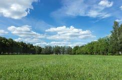 Krajobraz z niebieskim niebem i zieloną trawą Obraz Stock