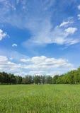 Krajobraz z niebieskim niebem i zieloną trawą Obraz Royalty Free