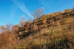 Krajobraz z niebieskim niebem, jesieni muśnięcie na obszarów trawiastych wzgórza i drzewa i Zdjęcie Stock