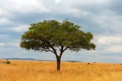 Krajobraz z nikt drzewnym w Afryka zdjęcie stock