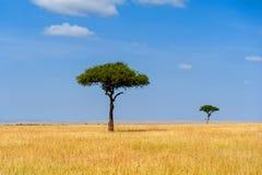 Krajobraz z nikt drzewnym w Afryka fotografia stock