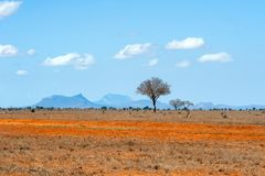 Krajobraz z nikt drzewnym w Afryka obraz stock