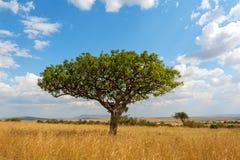 Krajobraz z nikt drzewnym w Afryka zdjęcie royalty free