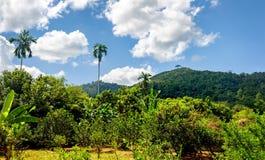Krajobraz z obłocznym niebem Zdjęcie Royalty Free