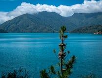 Krajobraz z oceanem, górami i drzewami, Tasman zatoka, Nelson teren, Nowa Zelandia zdjęcia stock