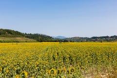 Krajobraz z słonecznikami, Tuscany Obrazy Royalty Free