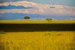 Krajobraz z sawann drzewami w Afryka, safari Obraz Stock