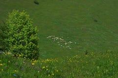 Krajobraz z sheeps zdjęcia stock