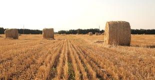 Krajobraz z siano rolką Fotografia Stock