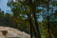 Krajobraz z siklawy Agua Azul, Chiapas, Palenque, Meksyk Obraz Stock
