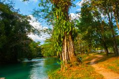 Krajobraz z siklawy Agua Azul, Chiapas, Palenque, Meksyk Zdjęcie Royalty Free