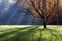 Krajobraz z Spadek ranek w parku. Fotografia Royalty Free