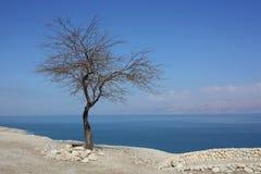 Nieżywy drzewo przy Nieżywym morzem Obraz Royalty Free
