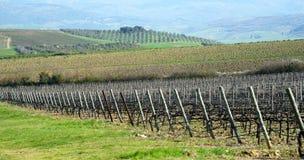 Krajobraz z winnicą Zdjęcia Royalty Free