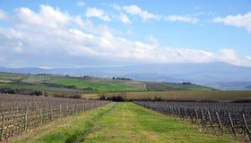Krajobraz z winnicą Obrazy Royalty Free