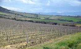Krajobraz z winnicą Fotografia Stock