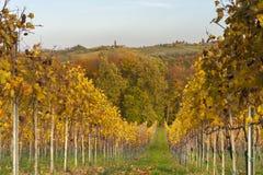 Krajobraz z winnicą w spadku Zdjęcie Stock