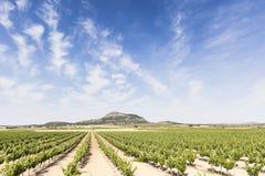Krajobraz z winnicami Fotografia Stock