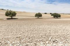 Krajobraz z zaoraną ziemią i drzewami Obraz Stock