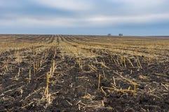 Krajobraz z zbierającym kukurydzy polem w Ukraina przy sezonem jesiennym zdjęcia stock