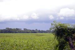 Krajobraz z zieleni niebieskim niebem i polem zdjęcia royalty free
