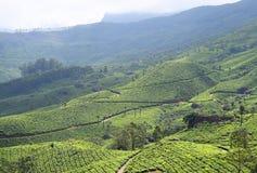 Krajobraz z Zielonymi wzgórzami, Herbacianymi ogródami i Naturalnym pięknem w Munnar, Idukki, Kerala, India obrazy stock