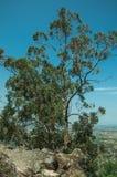 Krajobraz zakrywaj?cy drzewami i ska?ami blisko Monsanto obraz stock