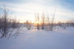 Krajobraz Zamarznięty las Zdjęcia Royalty Free