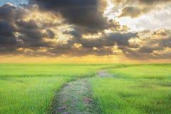 Krajobraz zasadzający outdoors w wieczór Zmierzchu słońca zmierzchu natura Zdjęcia Stock