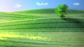 Krajobraz zieleniści wzgórza z drzewem świadczenia 3 d Zdjęcia Royalty Free