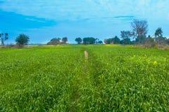 Krajobraz, zieleni pola z niebieskim niebem zdjęcia royalty free