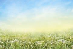 Krajobraz zielona łąka z białymi dandelions Zdjęcia Royalty Free
