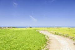 Krajobraz zielony jęczmienia pole, horyzont i obrazy royalty free