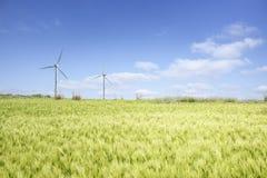 Krajobraz zielony jęczmienia pole Obrazy Stock
