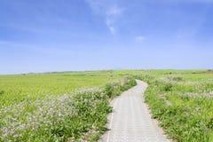 Krajobraz zielony jęczmienia pole, horyzont i Obrazy Stock